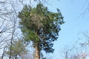 전나무 잎 정유에서 어류의 병원성 세균 생장 억제 효과 입증
